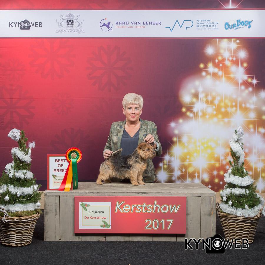 best_of_breed_4_kerstshow_2017